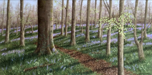 Bluebell Wood, Northwood