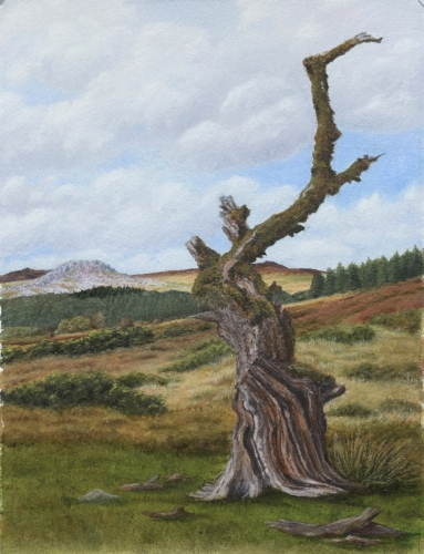 'A Dartmoor Veteran' oil on paper
